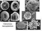 Fosilie nanoplanktonu o stáří 60-65 milionů let na snímku z elektronového mikroskopu. Autor: Timothy Bralower; Penn State
