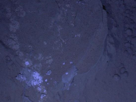 Stejná oblast osvětlená UV LED světlem. Credit: NASA