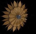 Květinová clona pro hledání exoplanet? Credit: NASA, JPL